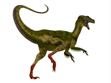 jurassic: Ornitholestes Dinosaur Tail - Ornitholestes was a small carnivorous dinosaur that lived in the Jurassic Period of Western Laurasia which is now North America. Stock Photo