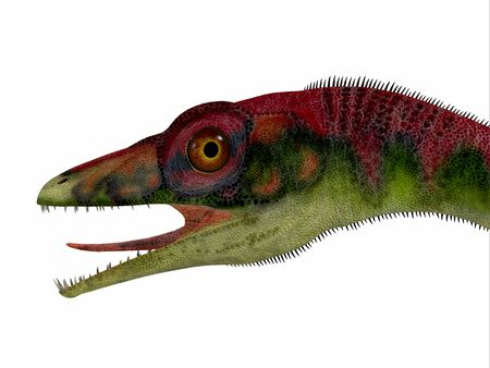 Compsognathus Dinosaur Head - Compsognathus was a small carnivorous theropod dinosaur that lived during the Jurassic Period of Europe. Stock fotó
