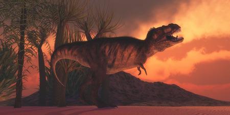 tyrannosaurus rex: T-Rex Tirano - Un dinosaurio Tyrannosaurus Rex ruge para reclamar su territorio, tal como se pone el sol en un día cretáceo en Norteamérica. Foto de archivo