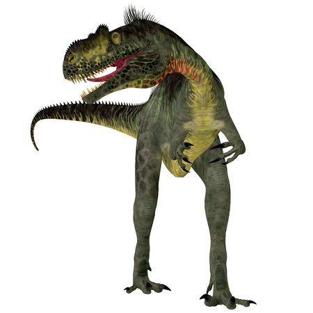 carnivorous: Megalosaurus on White - Megalosaurus was a large carnivorous theropod dinosaur that lived in the Jurassic Period of Europe.