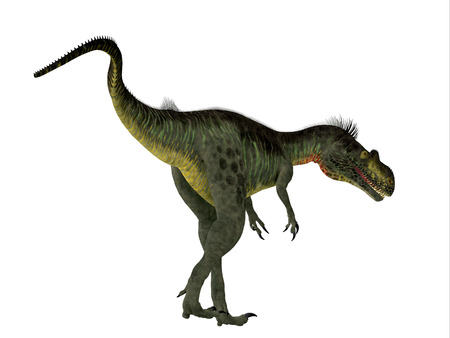 jurassic: Megalosaurus Dinosaur Tail - Megalosaurus was a large carnivorous theropod dinosaur that lived in the Jurassic Period of Europe. Stock Photo