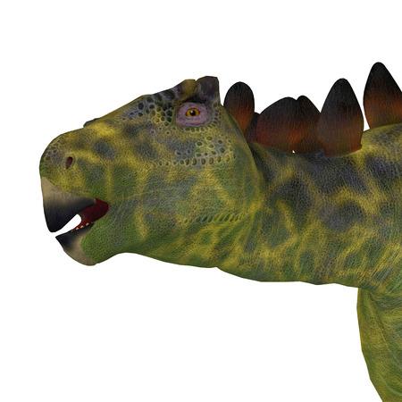 herbivorous: Huayangosaurus Dinosaur Head - Huayangosaurus was an armored herbivorous dinosaur that lived in the Jurassic Period of China.