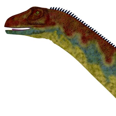 desierto del sahara: Jobaria la cabeza del dinosaurio - Jobaria era un dinosaurio saurópodo herbívoro que vivió en el Período Jurásico del desierto del Sahara en África.