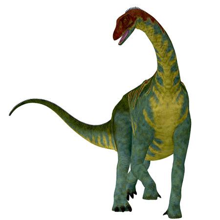 Jobaria on White - Jobaria was a herbivorous sauropod dinosaur that lived in the Jurassic Period of the Sahara Desert in Africa.