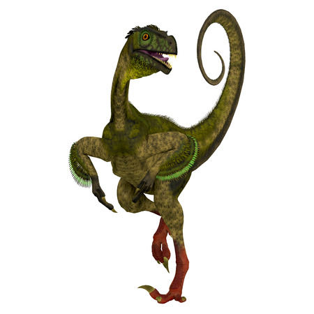 prehistoric era: Ornitholestes on White - Ornitholestes was a small carnivorous dinosaur that lived in the Jurassic Period of Western Laurasia which is now North America. Stock Photo