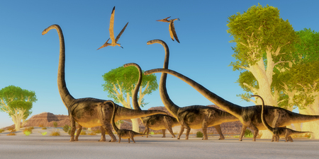 herd: Two Pteranodon reptile birds fly over a herd of Omeisaurus dinosaurs traveling through a Jurassic forest.