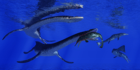 ness: A Metriorhynchus becomes a meal for a Plesiosaurus marine reptile in blue Jurassic seas. Stock Photo