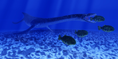 sneaks: A Plesiosaurus marine reptile sneaks up behind a school of Dapedius fish as it goes in for the attack.