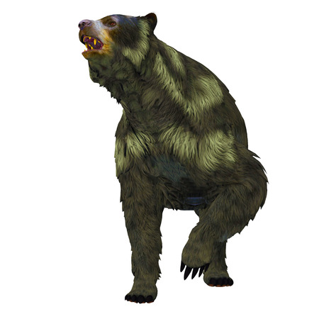 extinct: Arctodus Bear on White - Arctodus or Short-faced Bear is an extinct mammal that lived in North America in the Pleistocene Age.