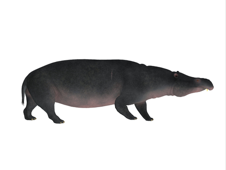 herbivore: Moeritherium Side Profile - Moeritherium is an extinct mammal related to the elephant and the sea cow. This herbivore lived in Egypt during the Eocene Period. Stock Photo
