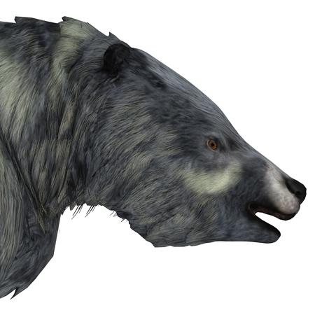 Megafauna Sloth