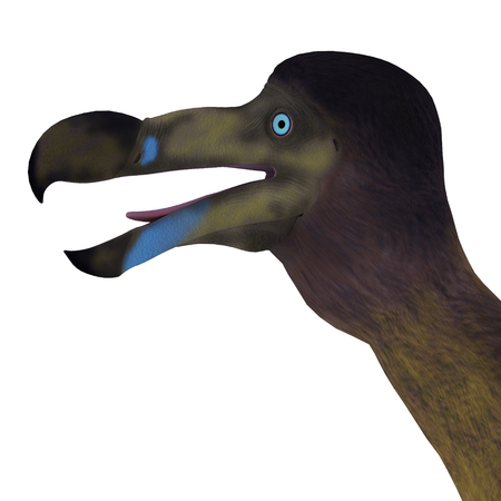 bipedal: Dodo Bird Head - The Dodo is an extinct flightless bird that lived on Mauritius Island in the Indian Ocean. Stock Photo