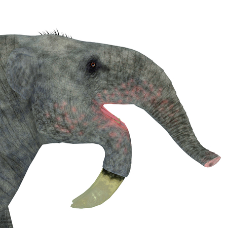 land mammal: Deinotherium Mammal Head - Deinotherium was an enormous land mammal that lived in Asia, Africa and Europe during the Miocene to Pleistocene Periods. Stock Photo