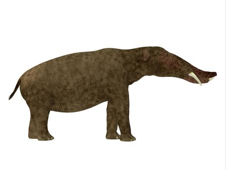 Platybelodon 横顔 - Platybelodon は、アフリカ、ヨーロッパ、アジア、北アメリカに中新世時代に住んでいた象に関連する草食性の絶滅した哺乳動物だった 写真素材