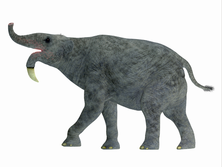 land mammal: Deinotherium Side Profile - Deinotherium was an enormous land mammal that lived in Asia, Africa and Europe during the Miocene to Pleistocene Periods.