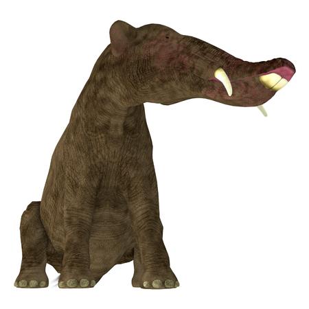 白 - Platybelodon Platybelodon だったアフリカ、ヨーロッパ、アジア、北アメリカに中新世時代に住んでいた象に関連する草食性の絶滅した哺乳動物です。