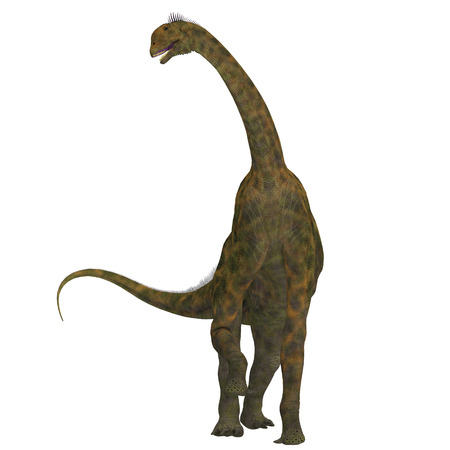 herbivorous: Atlasaurus on White - Atlasaurus was a large herbivorous dinosaur that lived in the Jurassic Period of Morocco, North Africa. Stock Photo