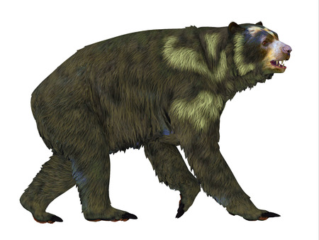 carnivores: Arctodus Bear Side Profile - Arctodus or Short-faced Bear is an extinct mammal that lived in North America in the Pleistocene Age.