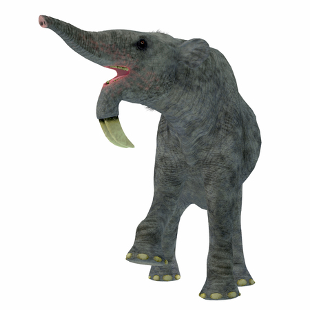 land mammal: Deinotherium on White - Deinotherium was an enormous land mammal that lived in Asia, Africa and Europe during the Miocene to Pleistocene Periods. Stock Photo
