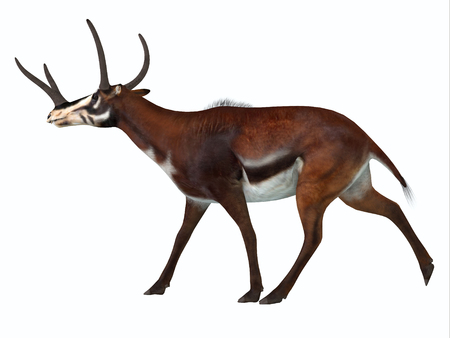 periods: Kyptoceras Side Profile - Kyptoceras was a antelope type mammal that lived in North America during the Miocene to Pliocene Periods.
