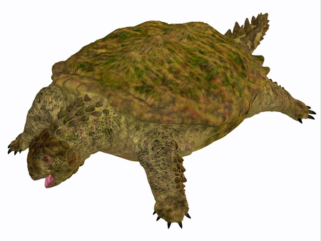 triassic: Proganochelys Turtle Body - Proganochelys is the second oldest turtle species discovered and lived in Germany and Thailand in the Triassic Period. Stock Photo