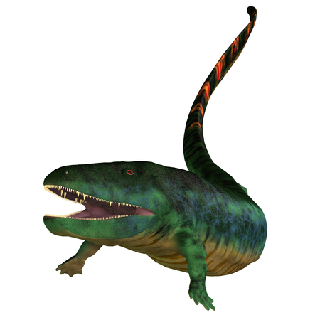 carboniferous: Eogyrinus Tetrapod Head - Eogyrinus was a aquatic predatory tetrapod that lived in the Carboniferous Period of England.