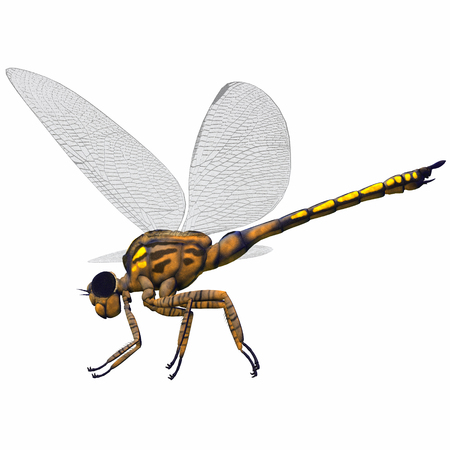 carboniferous: Meganeura Dragonfly Side Profile - Meganeura was an insect dragonfly that lived in the Carboniferous Period of France and England. Stock Photo