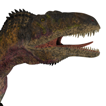 cretaceous: Acrocanthosaurus Dinosaur Head - Acrocanthosaurus was a theropod carnivorous dinosaur that lived in North America during the Cretaceous Period. Stock Photo