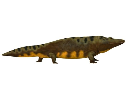 triassic: Mastodonsaurus Side Profile - Mastodonsaurus was an aquatic amphibian animal that lived in Europe during the Triassic Period.