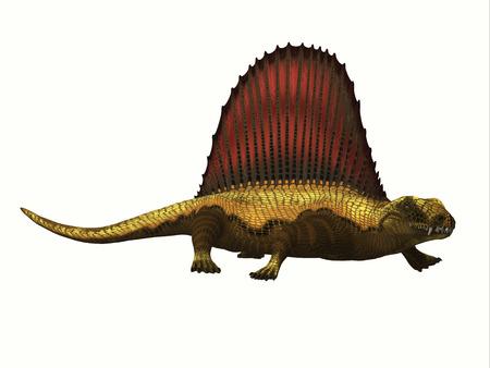 Dimetrodon Reptile Profile - Dimetrodon was a mammal-like sailback reptile that lived in the Permian Period of North America and Europe.
