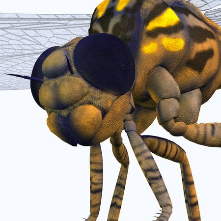 predatory insect: Meganeura Dragonfly Head - Meganeura was an insect dragonfly that lived in the Carboniferous Period of France and England.