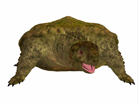 discovered: Proganochelys Turtle on White - Proganochelys is the second oldest turtle species discovered and lived in Germany and Thailand in the Triassic Period. Stock Photo
