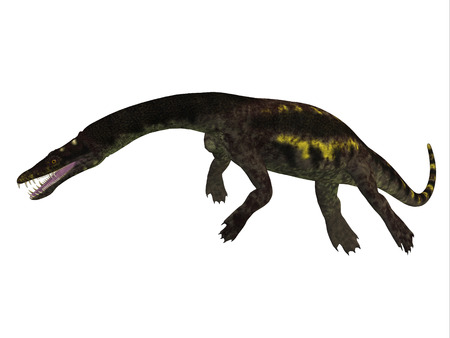 triassic: Nothosaurus Side Profile - Nothosaurus was a semi-aquatic carnivorous reptile that lived in the Triassic Period of North Africa, Europe and China.
