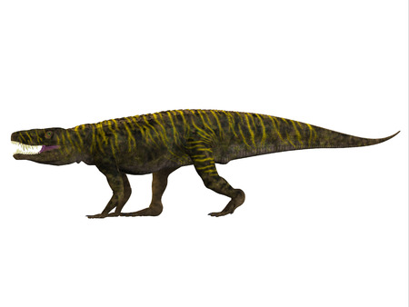 triassic: Batrachotomus Side Profile - Batrachotomus was a carnivorous archosaur predator that lived in Germany during the Triassic Period.