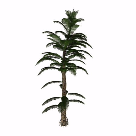 relatives: Calamitea striata Tree - Calamites are a type of horsetail plant that lived in the coal swamps of the Carboniferous Period. They were prehistoric relatives of the modern horse tail, but looked more like a pine tree and grew up to 40 to 100 feet.