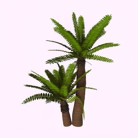 subtropical: River Cycad Plants - Cycads are seed plants with a long fossil history that were formerly more abundant and more diverse than they are today. The living cycads are found across much of the subtropical and tropical parts of the world.
