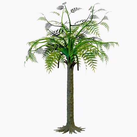 foliar: Alethopteris Tree - Alethopteris zeilleri is a foliar morphospecies tree from a medullosalean plant that grew widely in the Stephanian and Early Permian of tropical Laurasia. Stock Photo