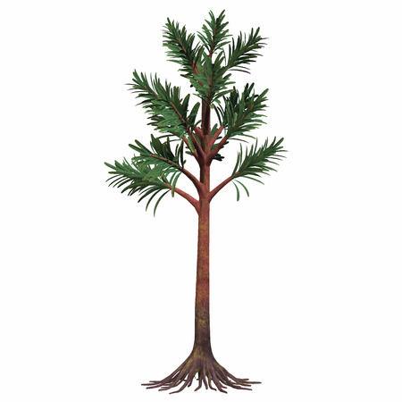 Permian Cordaites Tree - Cordaites are considered the ancestors of conifers. They were plants with an arboreal shape. They could grow very high and lived during the Permian Age.