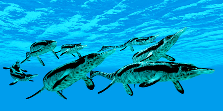 triassic: Cymbospondylus Marine Reptiles - Cymbospondylus Ichthyosaurs swim together in a pod searching for prey in a Triassic ocean. Stock Photo