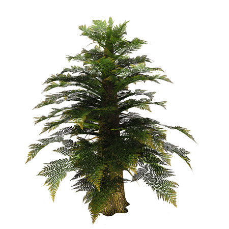diffused: Tempskya Tree - Tempskya was a tree fern diffused in the Cretaceous period. It�s large trunk was in fact the optical result of many fern stems growing tightly pressed one to each other. Stock Photo