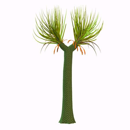 domination: �rbol Sigillaria - El gemelo de Lepidodendron, Sigillaria (con sus varias especies) compartido con ella la dominaci�n de los grandes bosques carbon�feros h�medos.