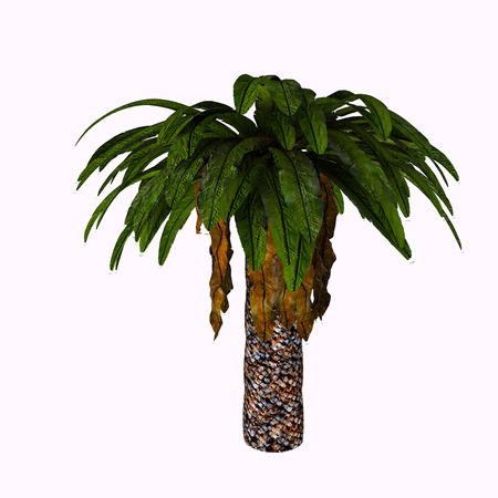 simplex: Bjuvia Tree - Bjuvia simplex is a cycadale plant with a simple leaf pattern that resembles that of Taeniopteris, an archaic tree fern. Stock Photo