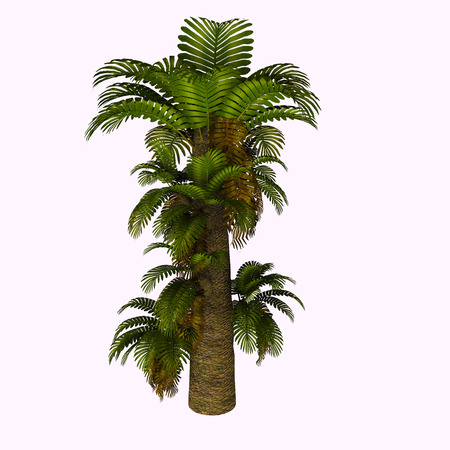 fronds: Zamites Tree - Zamites is a genus of fossil tree known from the Mesozoic of North America, Europe and India through the Oligocene of North America.