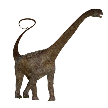 herbivorous: Malawisaurus Dinosaur on White - Malawisaurus was a herbivore sauropod dinosaur that lived in Africa during the Cretaceous Period.