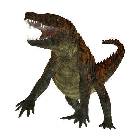 lived: Uberabasuchus on White - Uberabasuchus was an archosaur carnivorous crocodile that lived in the Cretaceous Period of Brazil.