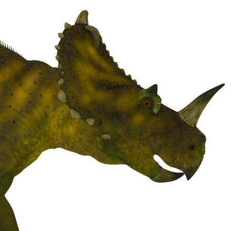 frill: Centrosaurus Dinosaur Head - Centrosaurus was a herbivorous ceratopsian dinosaur that lived in Canada during the Cretaceous Period. Stock Photo