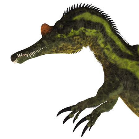 lived: Ichthyovenator Dinosaur Head - Ichthyovenator was a theropod spinosaur dinosaur that lived in Laos, Asia in the Cretaceous Period. Stock Photo
