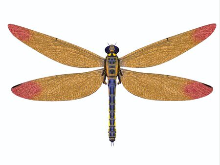 Carboniferous Meganeura Dragonfly - Meganeura was a large carnivorous dragonfly that lived in Europe during the Carboniferous Period. Stock fotó