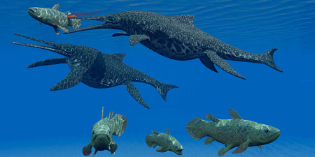 Triassic Shonisaurus Marine Reptile - A Coelacanth fish becomes prey for a Shonisaurus Ichthyosaur marine reptile during the Triassic Period. Stock Photo