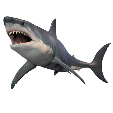 great white: Great White Shark Isolated - The Great White shark can grow over 8 meters or 26 feet and live to 70 years of age. Stock Photo